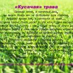 Кусачая трава